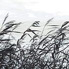 Reeds in the wind II by MistyIslet