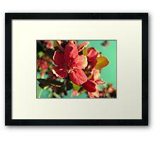 Vintage Bloom Framed Print