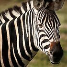 Wild Faces: Zebra by Christopher Ashdown