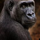 Wild Faces: Silverback Gorilla by Christopher Ashdown