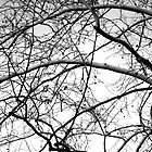 Web of Branches - black and white by MalinRawl
