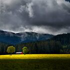Field of Mustard by Charles & Patricia   Harkins ~ Picture Oregon