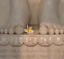 Flower of Worship. by Mukesh Srivastava