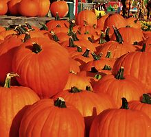 Lots Of Pumpkins by James Brotherton