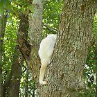 My perch beige cat in crotch of dying tree in neighborhood by MeMeBev
