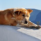 Pondering Dog Laying on the Edge of Town by Katerina Vorvi