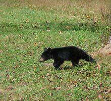 Baby Bear  by sweetrose