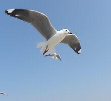 Sea-gull   ~   Seemeeu in vlug by Pieta Pieterse