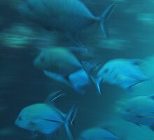 Black Trevally in motion by Dr Andy Lewis