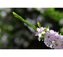 Tiny garden treasure Photographic Print