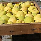 Quinces Ready for Jelly by karina5