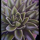 Succulent by Leigh Donovan