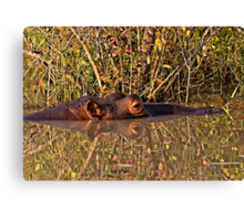 Hippo Reflections Canvas Print