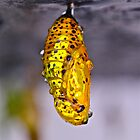 Tree Nymph Pupa by DebbyTownsend