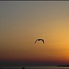 sunset over Roscoff by jean-jean