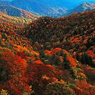 AUTUMN, NEWFOUND GAP ROAD by Chuck Wickham