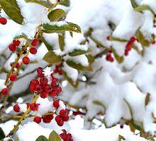 Snow Berries by George  Taylor