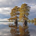 Lake Drummond Seasons by Michele Conner