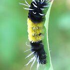 Fuzzy Wuzzy by Kathi Arnell