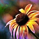 *Sun Kissed Daisy* by DeeZ (D L Honeycutt)