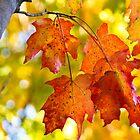 Fall Leaves by A. Kakuk