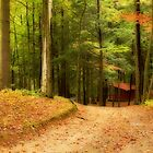 Autumn path II by PhotosByHealy