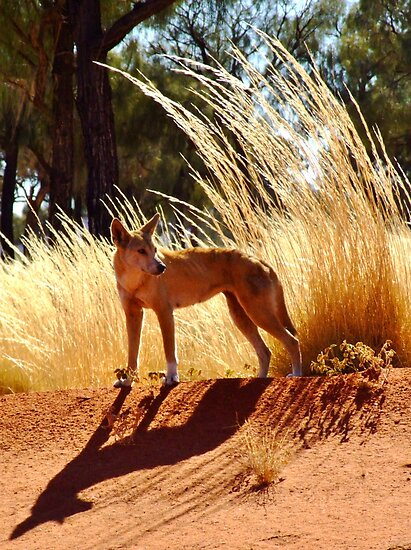 Huntress, East of Docker River, Northern Territory by MiksPics