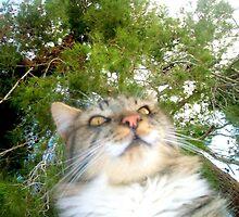 Sammy Watching the Humming Birds by BingoStar