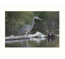 Blue Heron on the Milwaukee River Art Print