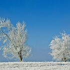 Frosty trees by Tom Porter