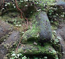 Face of an Olmec by Bernhard Matejka