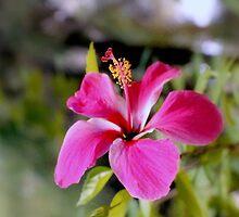 Bahamian Flower by Deborah Crew-Johnson