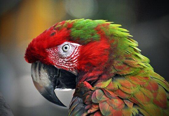Parrot by venny