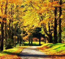 Morning Walk by Jane Best