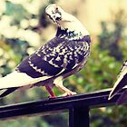 Pigeon Attitude by mikebone