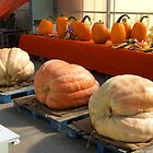 Huge Pumpkins! by Stephen D. Miller