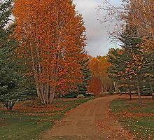 Autumn In My Yard by Vickie Emms