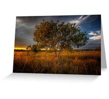 Sundown Tree Greeting Card