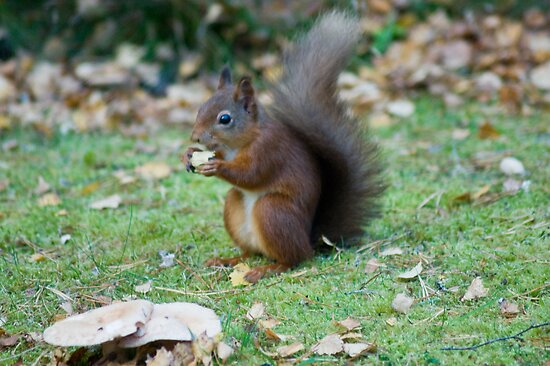 The Tail Of The Squirrel With Monkey Nuts by VoluntaryRanger