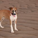 Bella on the beach by Jenny Dean