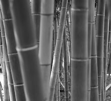 Bamboo B&W by Sam Ryan
