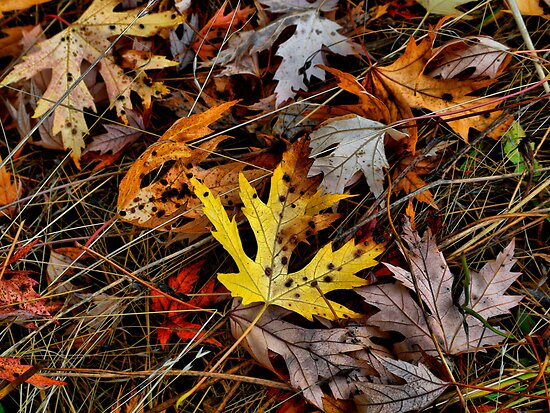 Just A Leaf by Charles & Patricia   Harkins ~ Picture Oregon