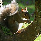 Enjoying my nut  by Ann Persse