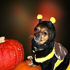 Me A Bumble Bee! by Penny Odom