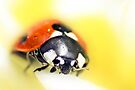 A Ladybird Came Calling by missmoneypenny