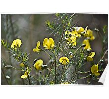 Pale Wedge Pea Poster