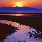 Island Night by David Alexander Elder