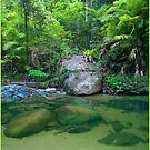Nyletta Creek, FNQ by Susan Kelly