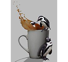 Tea Break - Pick up a Penguin Photographic Print