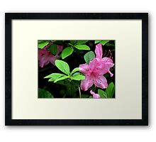 Delightful Beauty Framed Print